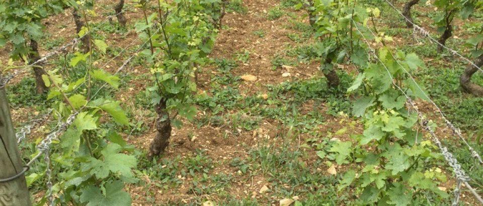 Rentrée 2018 : Ouverture du BTSA Viticulture-Œnologie (VO)