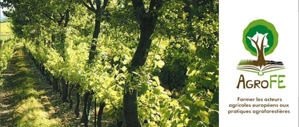 Agrof-MM :  former les acteurs agricoles européens aux pratiques agroforestières